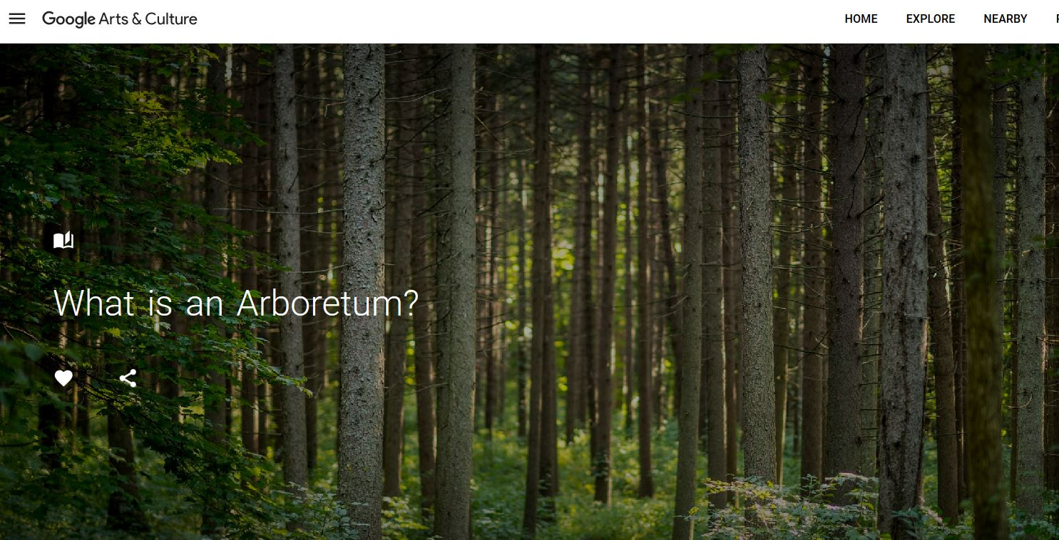 What is an arboretum