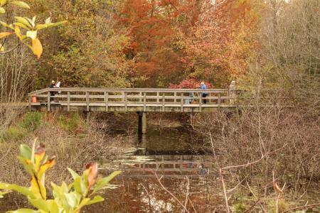 Adkins Arboretum - photo by  Kellen McCluskey.