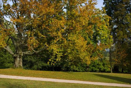 Arboretum Zampach - fall trees