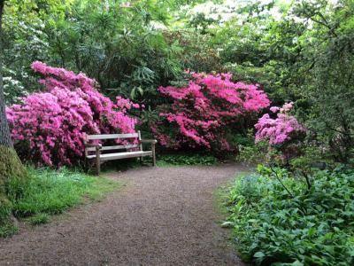 Howick Hall Arboretum spring blooms
