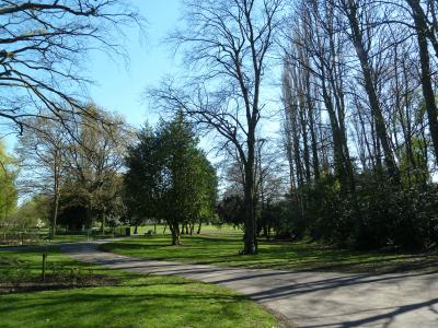 Brunswick Park trees