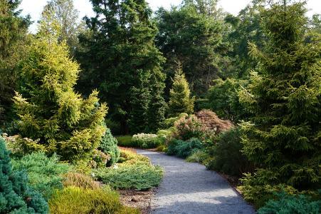 Bayard Cutting Arboretum Conifer Garden