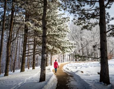 Arboretum snow