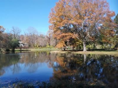 Fall trees at Willow Park Preserve