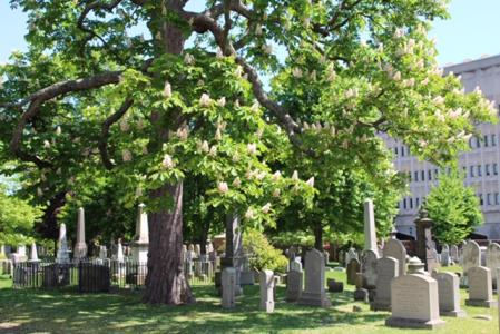 Grove Street Cemetery Arboretum