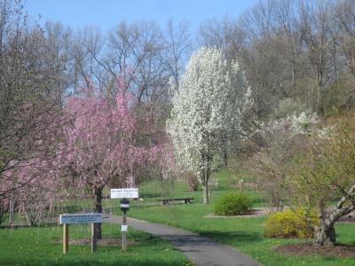 Orchard Arboretum - spring