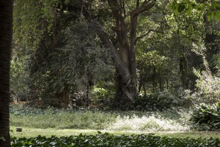 Botanic Garden of the City of Buenos Aires - trees