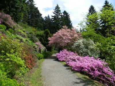 Pruhonice Park  - Lower Alpinum