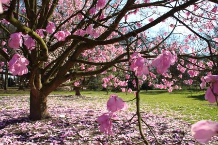 Arboretum Wespelaar