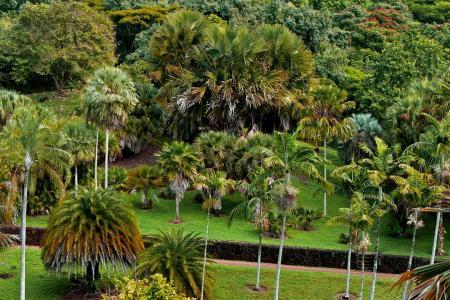 Arbnet | National Tropical Botanical Garden