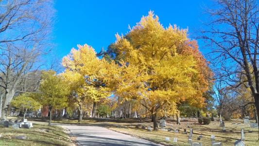 Woodland Cemetery and Arboretum November 2016 autumn trees