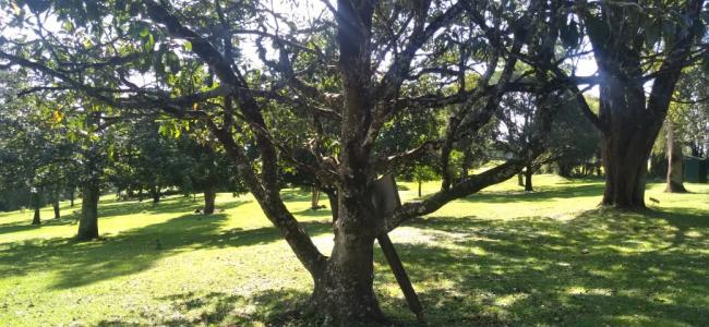 Flicker of Hope tree