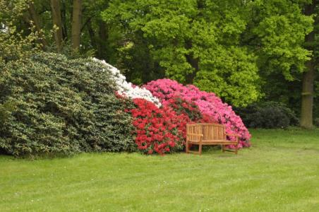 Pruhonice Botanic Garden -Rhododendrons