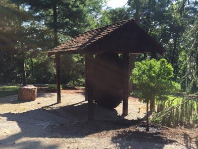 Rowe Arboretum Redwood slice