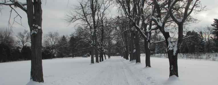 Vale Arboretum Treeline Brandywine - winter
