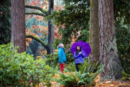 UW Botanic Gardens autumn - Dennis Wise