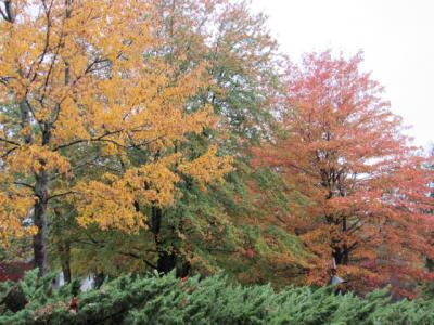 Greenville fall trees