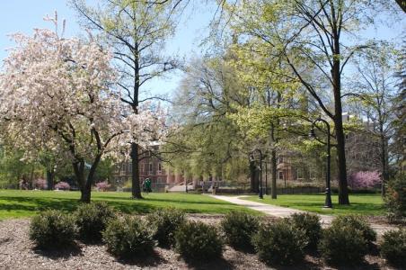 Penn State spring trees