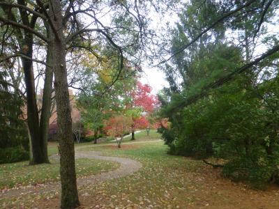 Maple Knoll Village trees