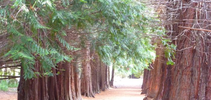 Jardin Botanico Isla Victoria