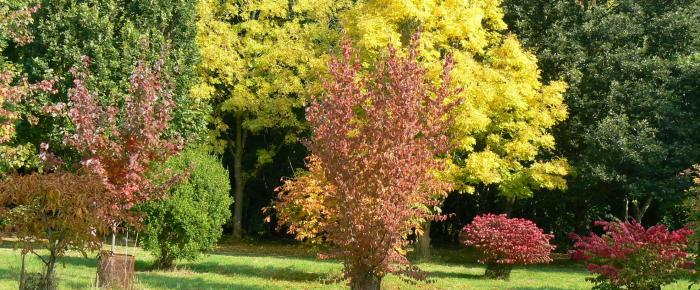Arboretum fall trees
