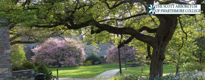 The Scott Arboretum of Swarthmore College grounds