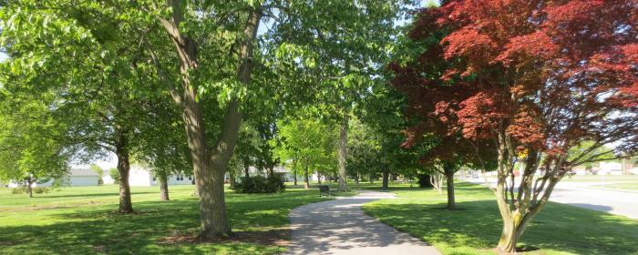 Arboretum trees