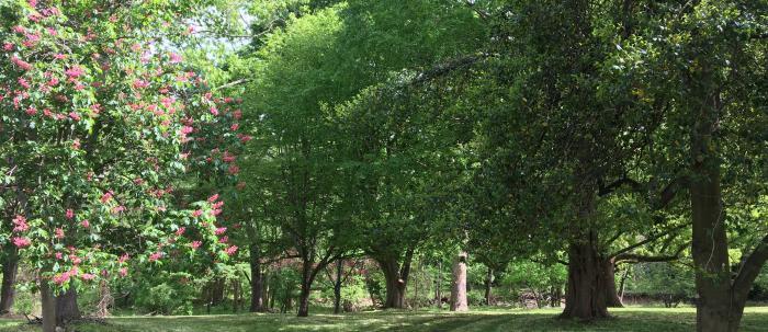 Burgess Arboretum