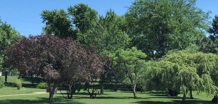 Crete School Arboretum