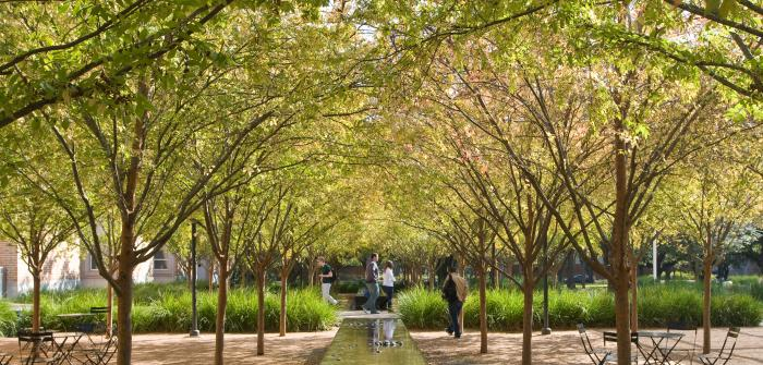 Crownover Courtyard Rice University - trees
