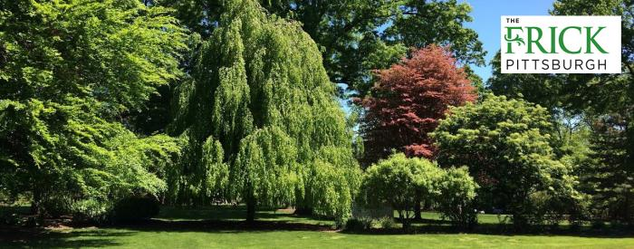 The Frick Pittsburgh beech trees