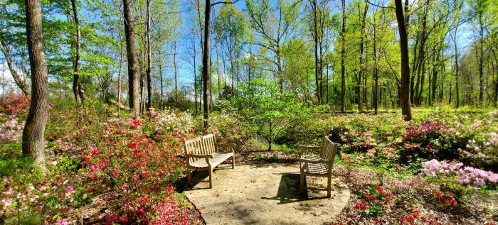 Huntsville Botanical Garden Azalea Trail