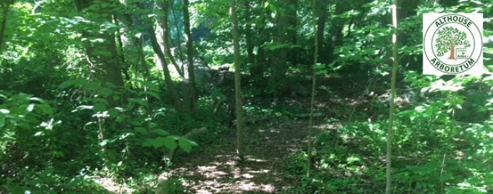 Althouse Arboretum - walking trails