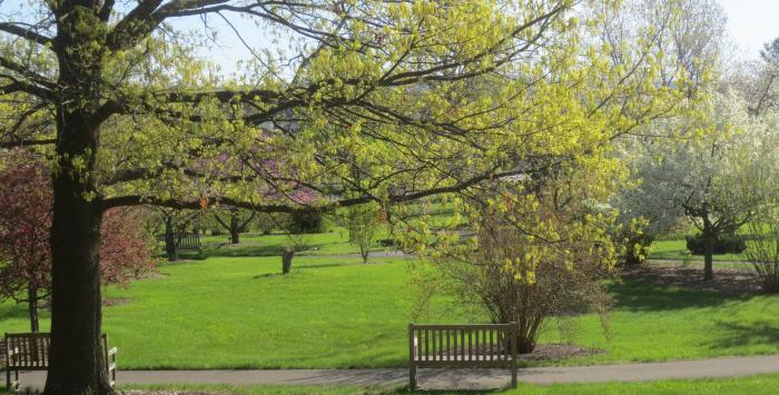 Orchard Arboretum