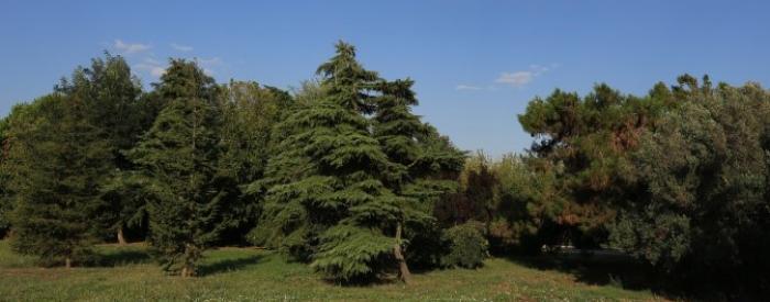 Malva Permakultur trees
