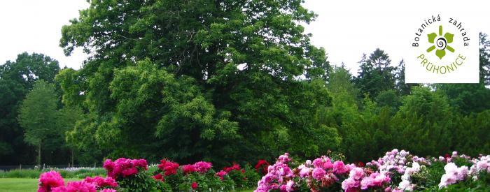 Pruhonice Botanic Garden