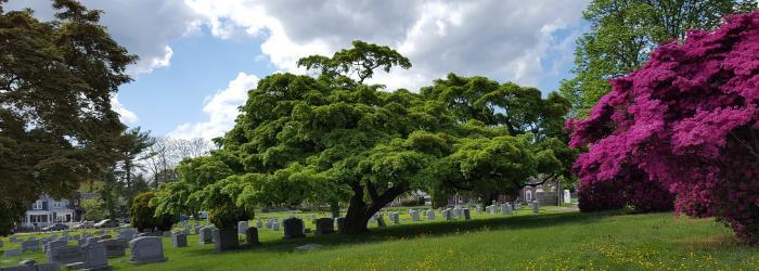 Riverview Cemetery Arboretum