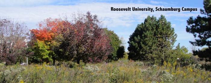 Roosevelt University, Shaumburg campus