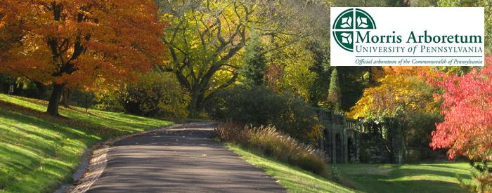 The Morris Arboretum