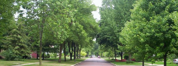 Village of River Forest trees