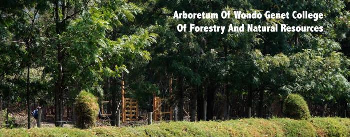 Arboretum at Wondo Genet