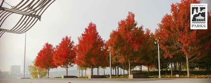 Smale Riverfront Park - fall trees