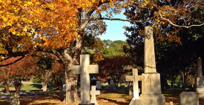 Arboretum at Oakwood
