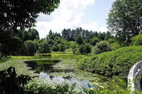 Cornell Plantations grounds with invasive species