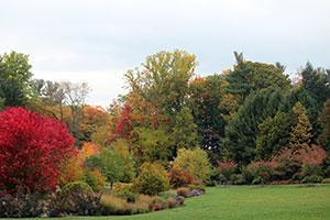 Cornell Botanic Gardens - Fall color