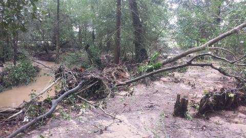 Peckerwood Arboretum - Cornus & Ilex down after hurricane