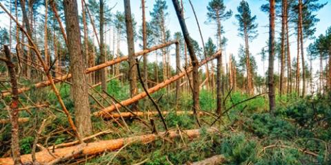 trees break