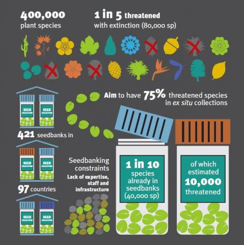 seedbanking trees poster
