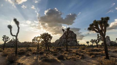 In Joshua Tree National Park   Photo: Christopher Michel, some rights reserved