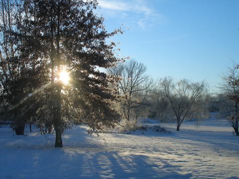 Taltree Arboretum winter